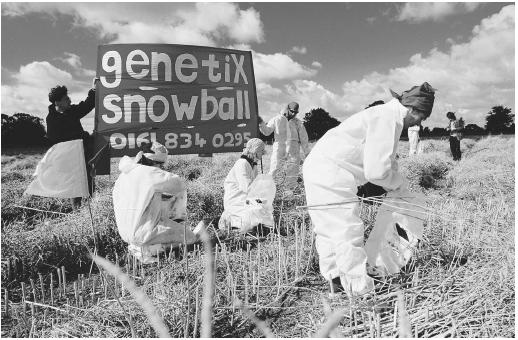 Protesters pulling up genetically modified crops from a field in Banbury, U.K., during the 1990s. Crops are genetically modified to increase productivity and to produce chemicals, among other uses.