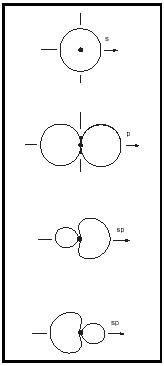 Figure 7. Formation of two sp hybrid orbitals resulting from the combination of one s and one p atomic orbital.