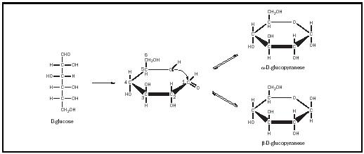 L Galactose Chair Figure 2