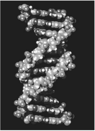 A computer-generation representation of the double-helix structure of DNA.