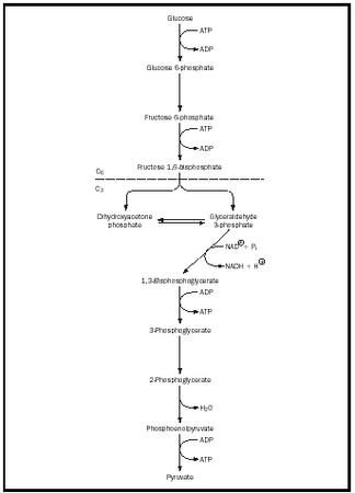 Glycolysis chemistry encyclopedia structure molecule figure 1 the glycolytic pathway ccuart Choice Image
