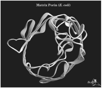 A three-dimensional computer model of a protein molecule of matrix porin found in the E. coli bacteria.