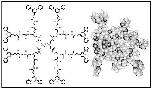 Figure 1. Molecular representation of a dendrimer (left) and a 3-D molecular model of the same dendrimer (right).