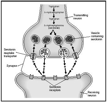 Neurotransmitters - Chemistry Encyclopedia - structure, proteins ...