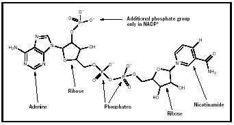 Figure 1b. Structure of NADP+