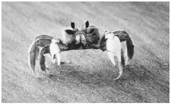 Chitin, the earth's second most abundant polysaccharide, is the fundamental substance in the exoskeletons of crustaceans.