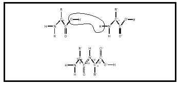 Figure 1. When amino acids react, they form what is called a peptide bond. The resulting molecule, called a dipeptide, has one end that is basic and another that is acidic.