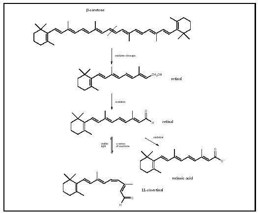 Retinol - Chemistry Encyclopedia - structure, examples, number ...